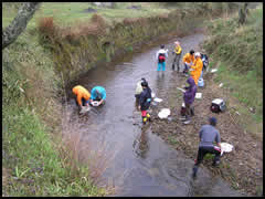DVD「川の中をのぞいてみよう--水生動物を調べる」